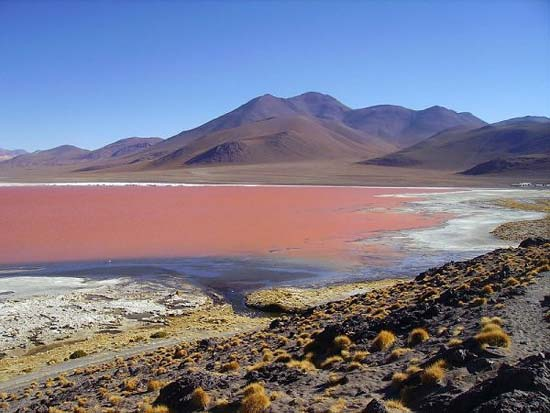 Red Lake at Uyuni salt plains, Bolivia
