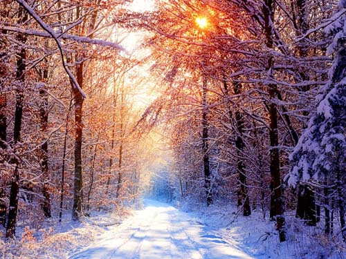 winter-forest-2