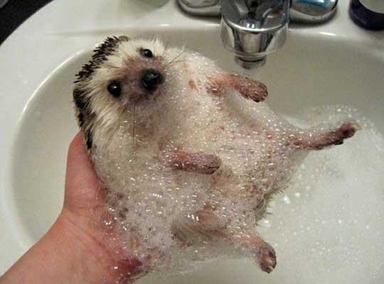 Bathhog