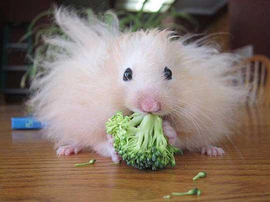Broccoli-Makes-Me-Fluffy-l