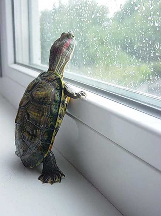 Curious Turtle