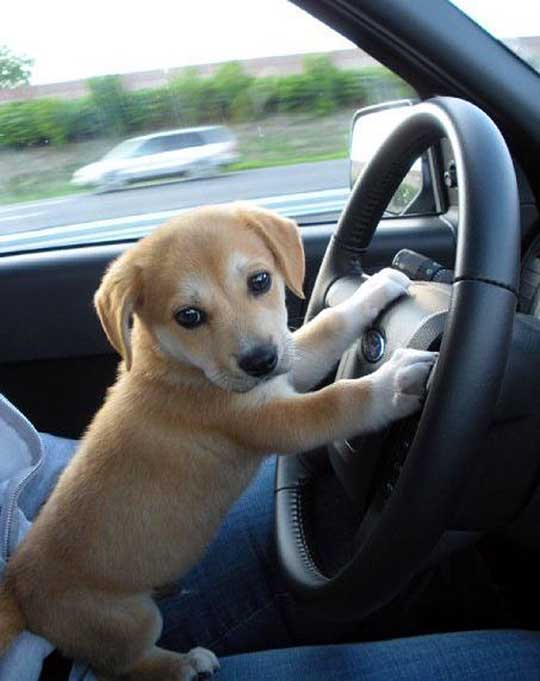 Driving to Puppy Park