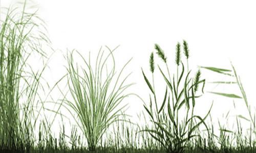 Grassland Brushes