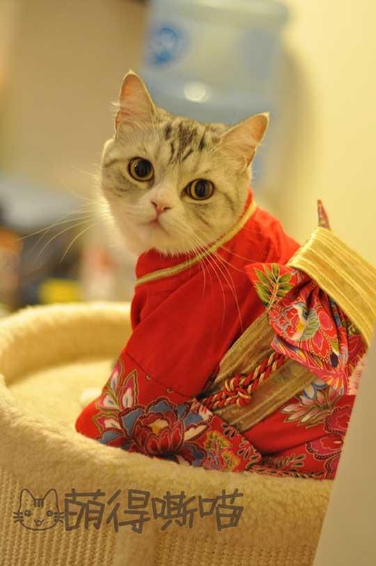 I'm a Japanese Woman