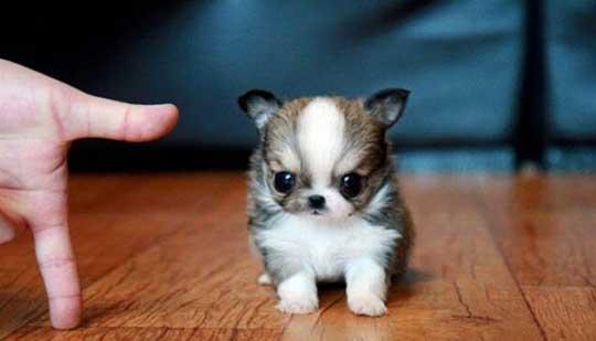 Mini Purp