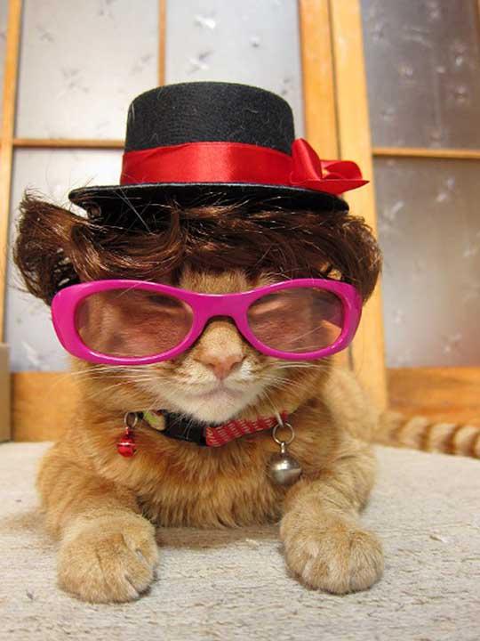 Ms.Cat