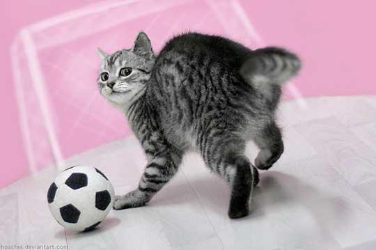 Minka for soccer WM 2