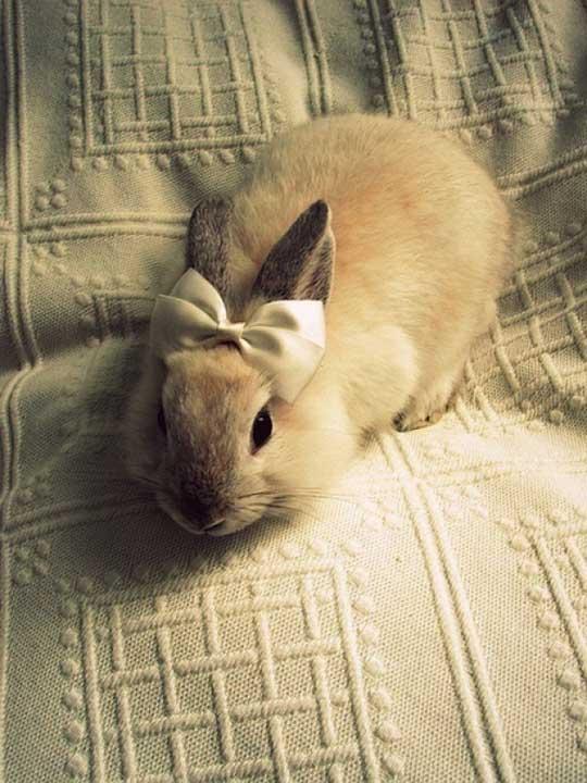 An Elegant Rabbit