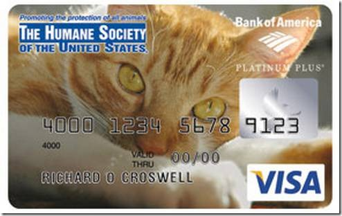 18-cat-credit-card