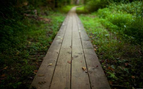 Forest Planks