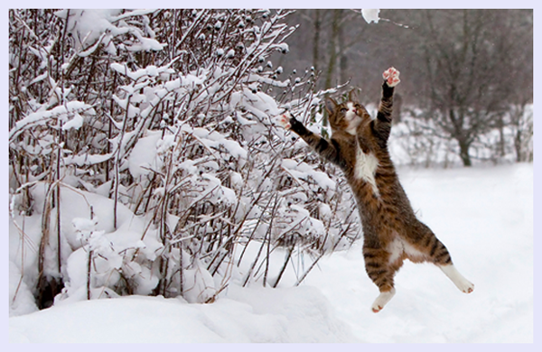 Catch the snow by Vinni Bruhn