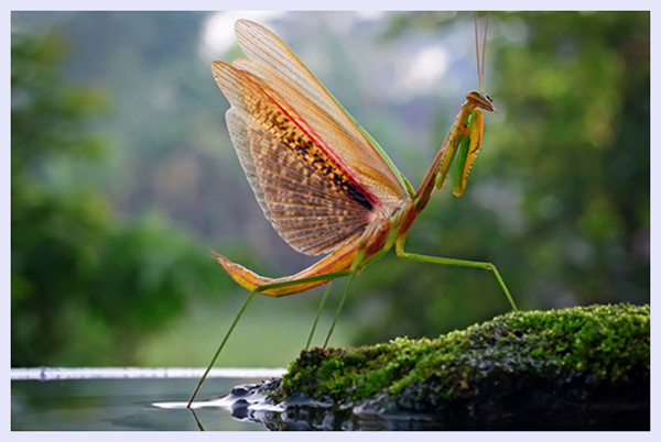 Show off by Teguh Santosa