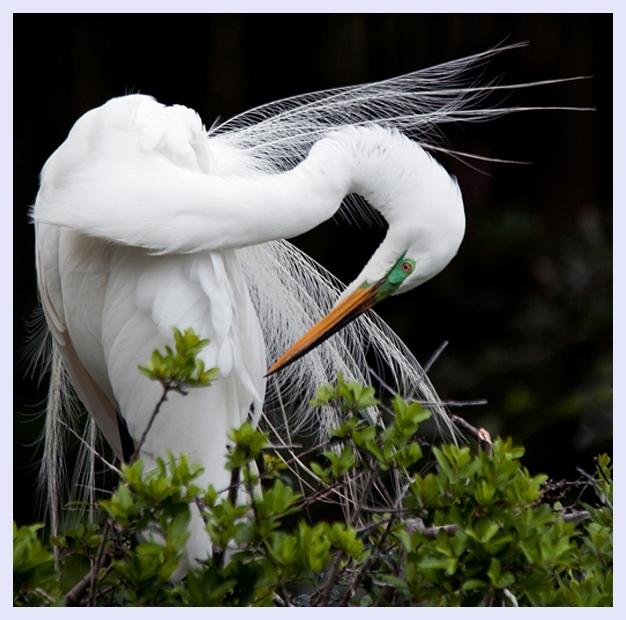 Preening by Jeff Milsteen