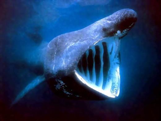 Shark fear