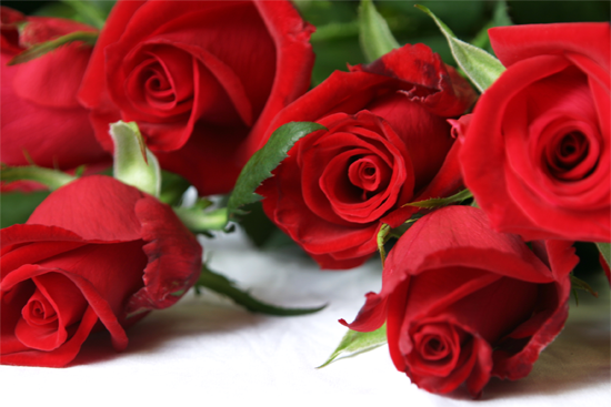 Spell of red roses-24