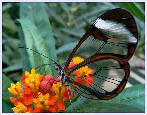 Flickr butterfly