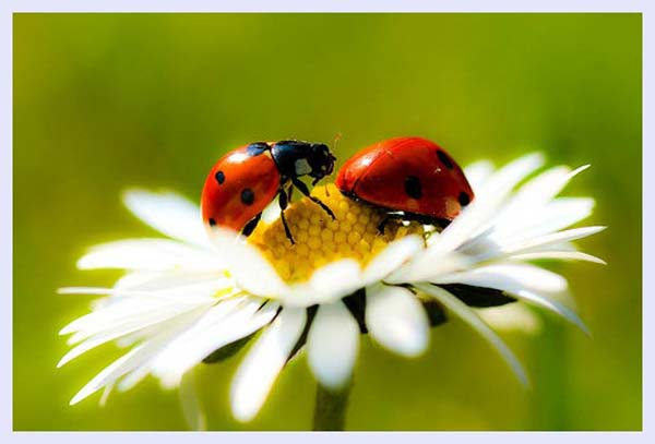 Lady bird by Valentin
