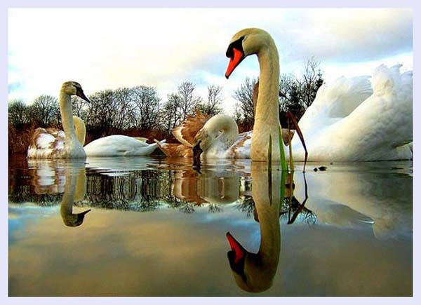 5*2 Swan by Nicolas Valentin