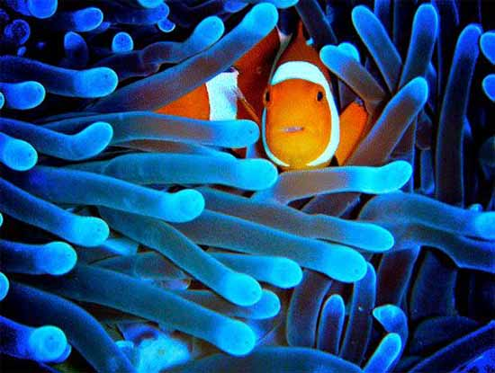 underwater-photography-13