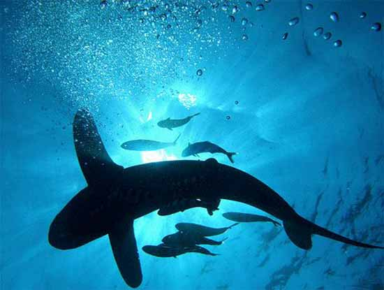 underwater-photography-19