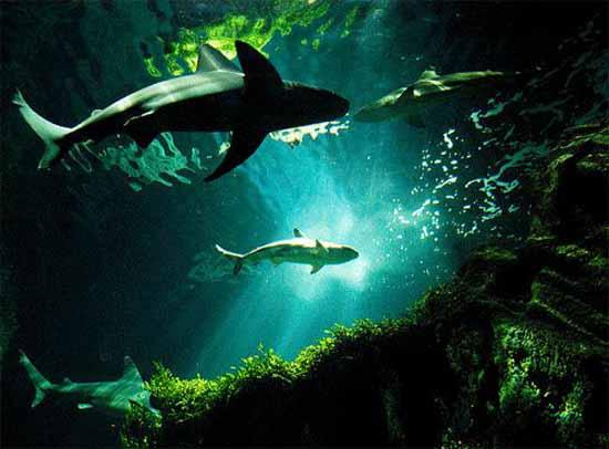 underwater-photography-21
