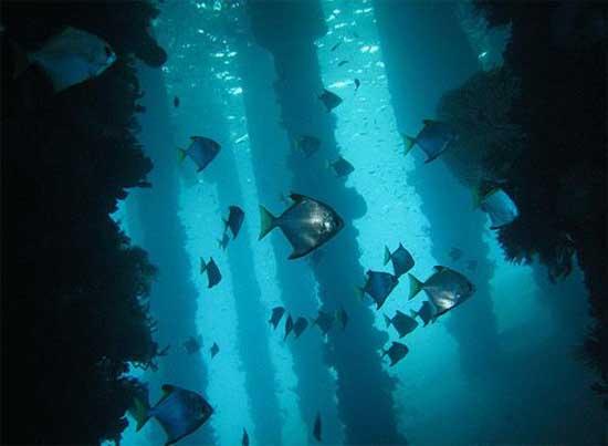 underwater-photography-22