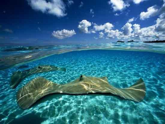 underwater-photography-24
