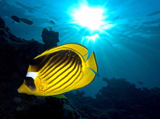 underwater-photography-25