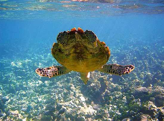 underwater-photography-4