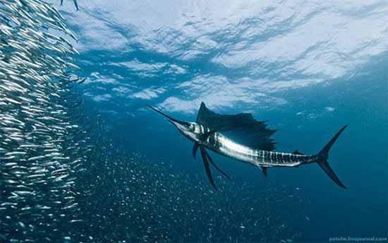 underwater-photography-7