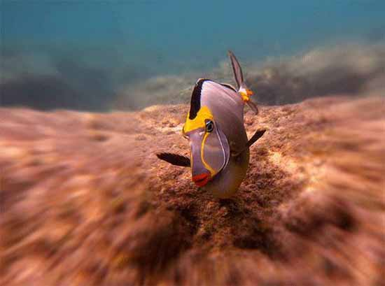 underwater-photography-8