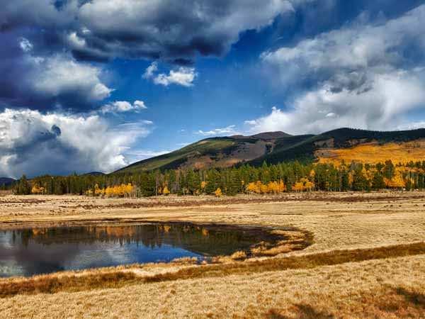 Aspen Wetland