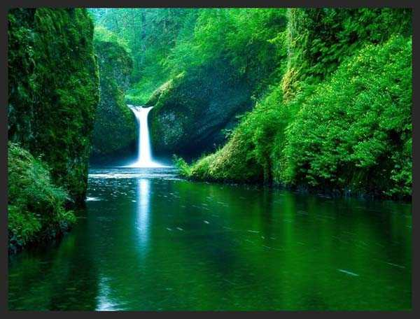 Amazing and best nature photography in green