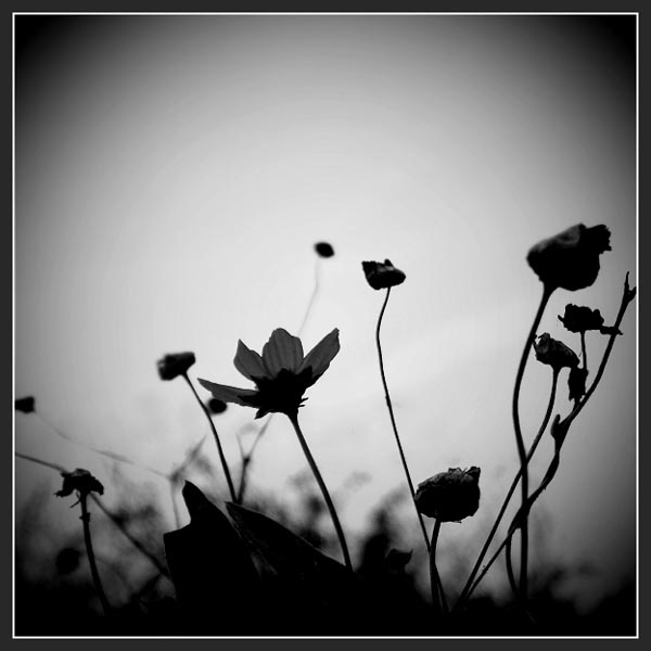 BW Nature by Cashee Foo