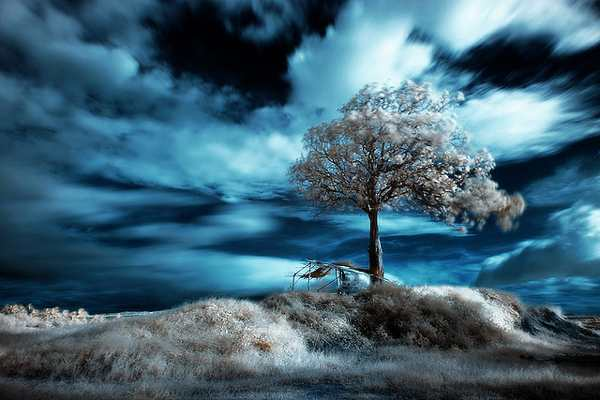 Blue Infrared by Davedeluria