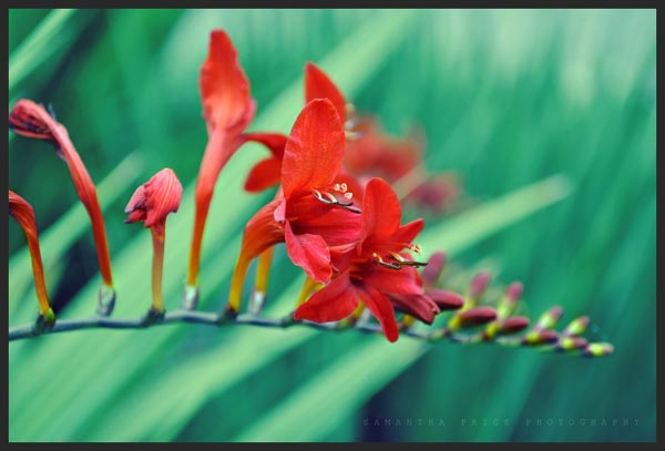 Crispy Nature by Sammy Spectacular