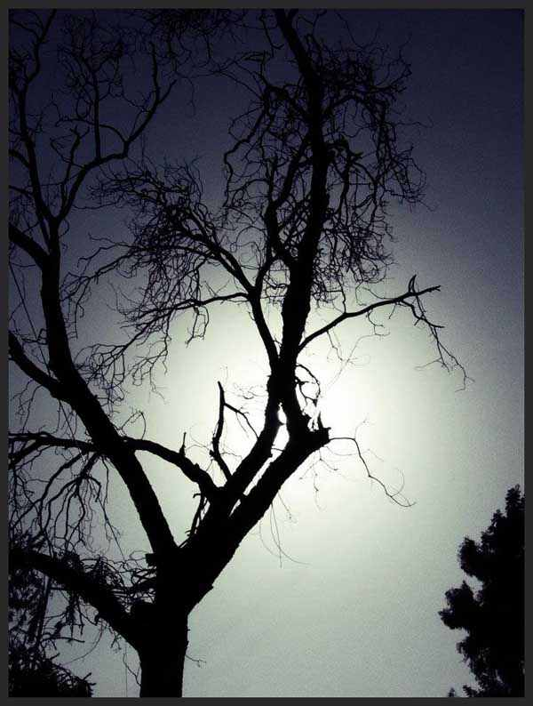 Nature Photography by Hamza Baig