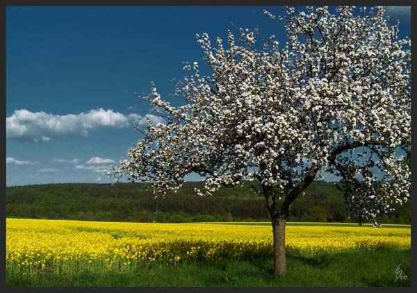 Flowering Nature by Saphira 11