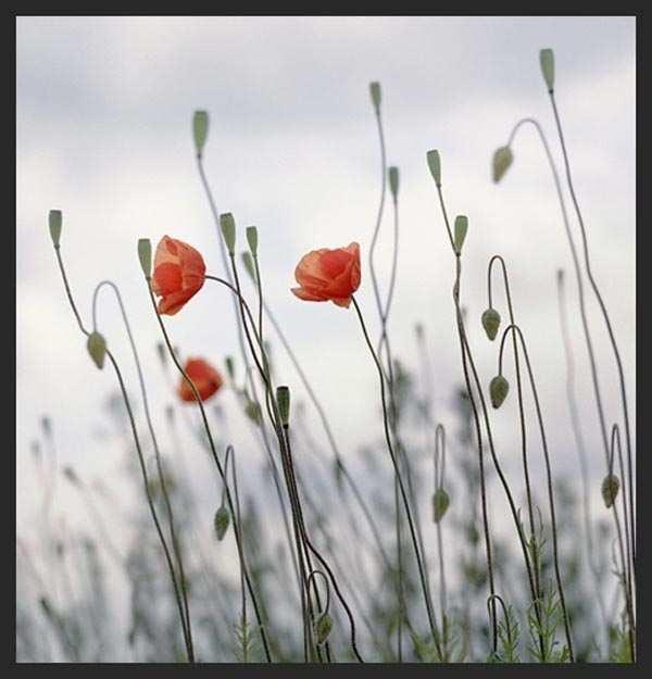 Flowers in bloom by Arnoldas Jurgaitis