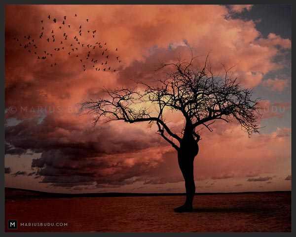 Human Nature by Binary Vision