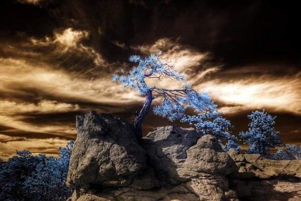 Infrared HDR Palmer Park Colorado Springs by Brokentaco