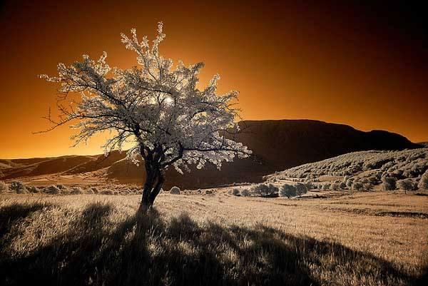 Infrared Sunrise by Konczy77