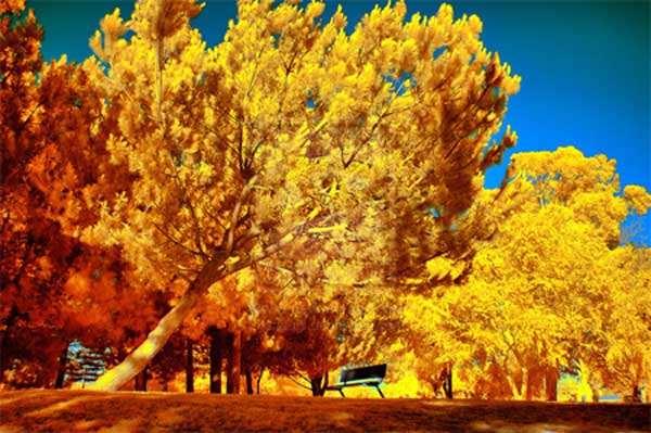Infrared by Biozz