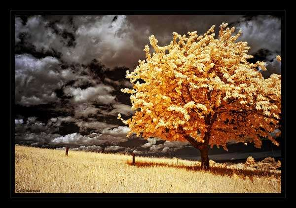 Infrared Landscape by Black Daddy