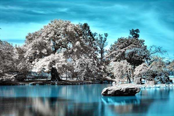 The Japanese Garden in Infrared by Iragerich