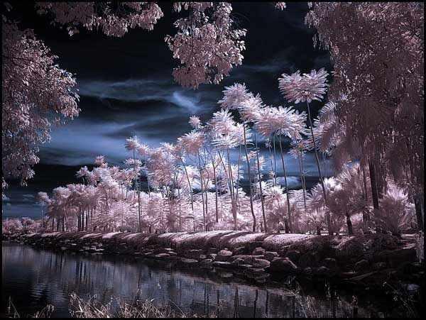 Tropical Garden Infrared by MichiLauke
