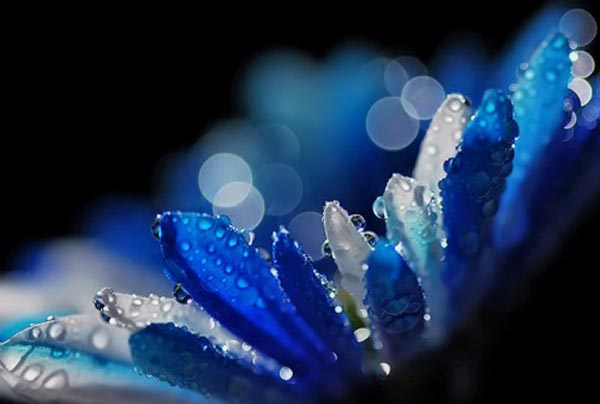 Winter Blues By Ursula