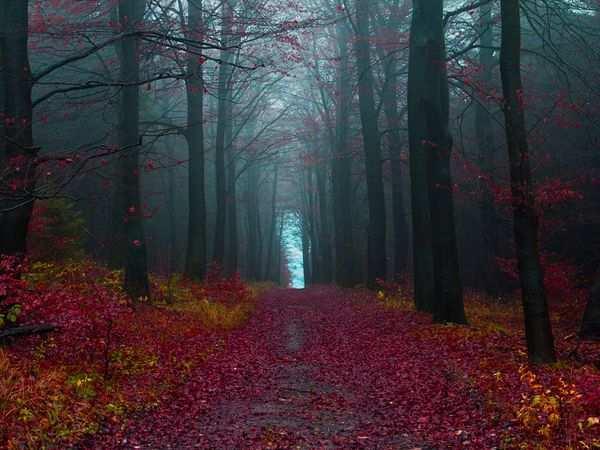 Autumn Forest by Jonathan Manshack