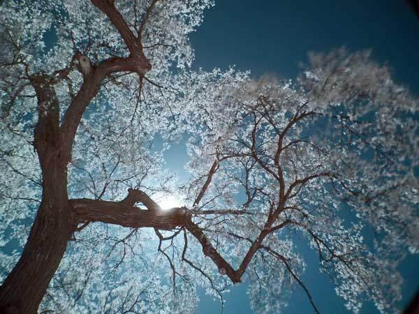 Infrared Dreams by Food Shelf