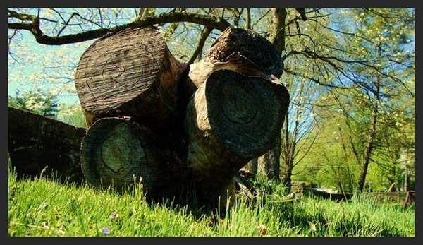 Nature Photography by Kigenart